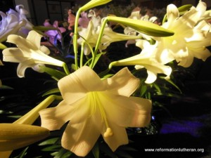 Reformation Lutheran Church lilies